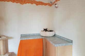gemütliche Cat's Corner
