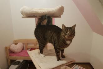 toll im Kitty Loft