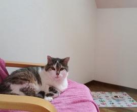 Micki genießt das Kitty Loft.