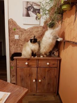 Buero-mit-Katzen